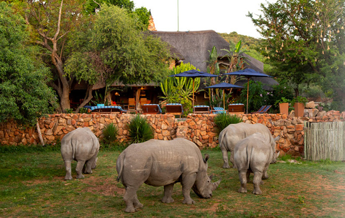 Rhino of the Waterberg Biosphere at Ant's Nest