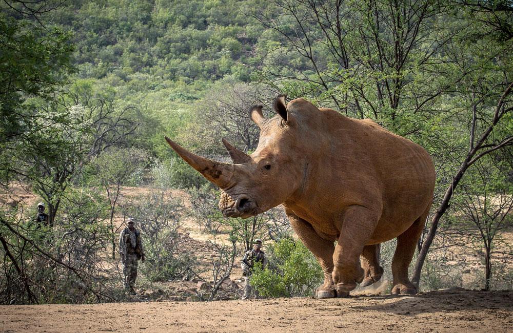 Protecting Rhino with Waterberg Rhino UK