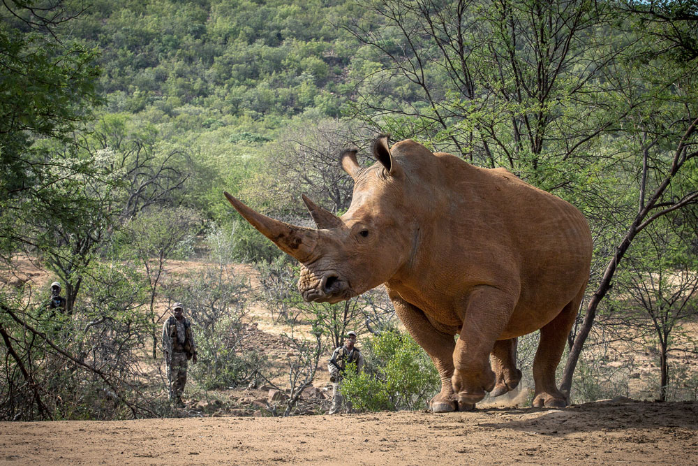 Protecting Rhino with Waterberg Rhino UK