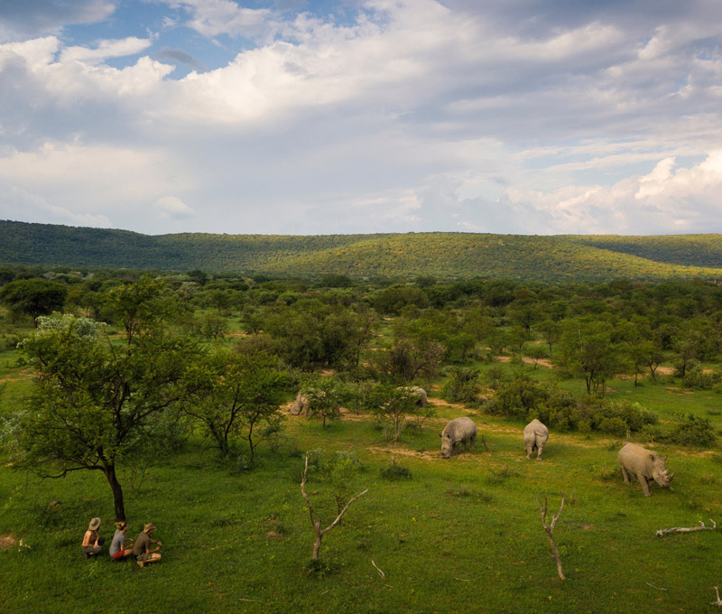 Waterberg Rhino UK - Protecting Rhino against Poaching in the Waterberg Biosphere South Africa