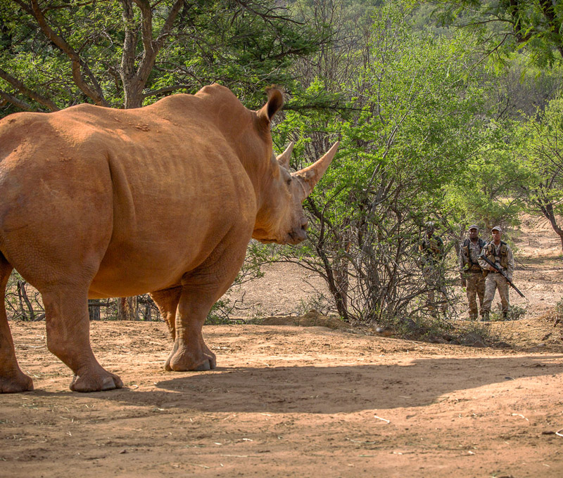 Waterberg Rhino - Saving the Rhino of the Waterberg South Africa